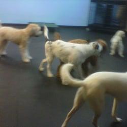 Dog Training Arlington Ma
