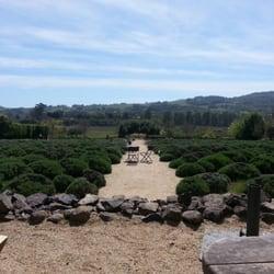 Matanzas Creek Winery - Lavender field - Santa Rosa, CA, Vereinigte Staaten