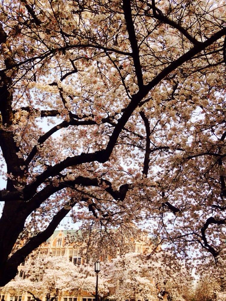 Seattle (WA) United States  city photo : ... Washington University District Seattle, WA, United States Yelp