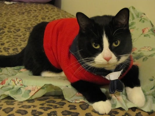 Westfield Homeless Cat Project Reviews