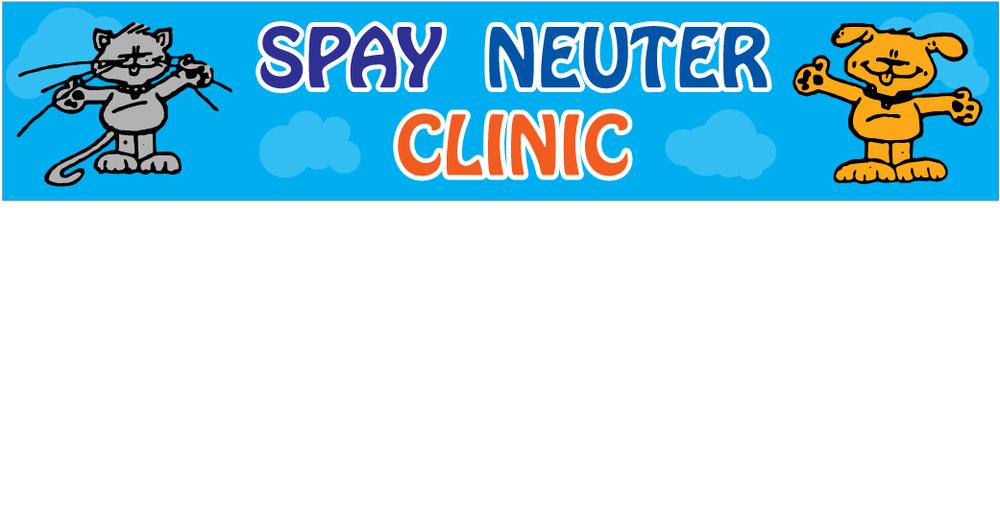 newborn kittens care