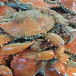 The crab lady seafood markets 2207 gordons ln for Fish market richmond va
