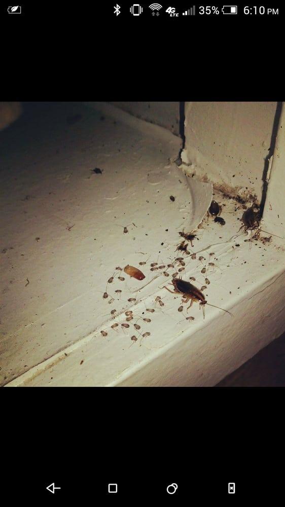 Termite Mound Elite Termite And Pest Control