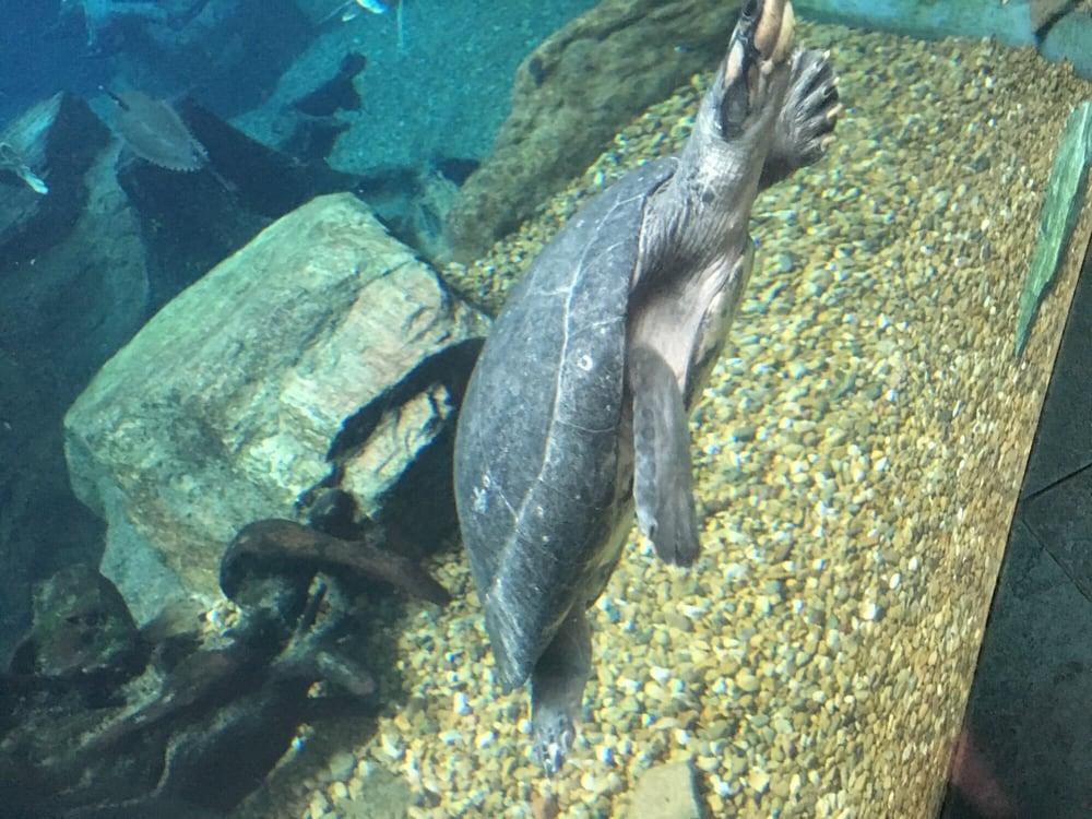 Photos For The Dallas World Aquarium Yelp