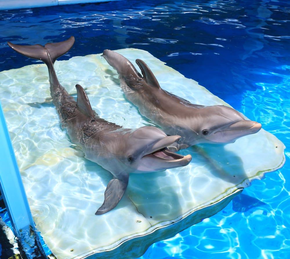 for Marina aquarium