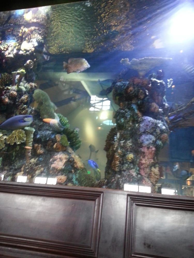 Islamorada fish company 39 photos seafood restaurants for Islamorada fish company menu