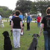 All Breed Obedience Training Club: Dog Training
