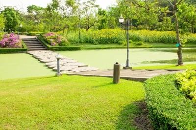 peindre sa pelouse en vert