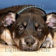 Tierfotografie - mehr Informationen auf…