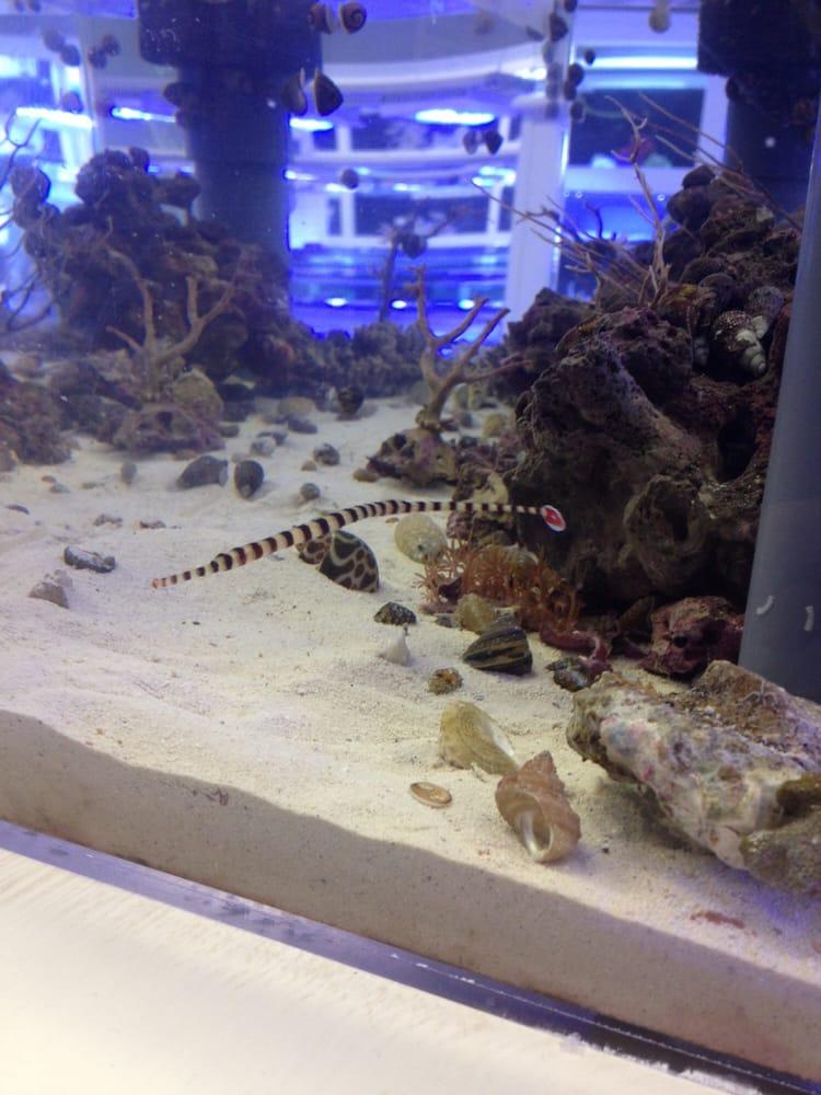 Aquatic Fantasy 36 Photos Local Fish Stores Redondo