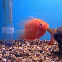 jim s exotic fish 25 photos pet shops el segundo