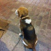 Gallo Romano - Paris, France. Restaurant guard dog