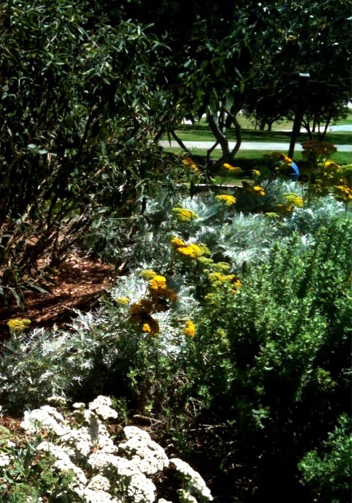 Manhattan Beach Botanical