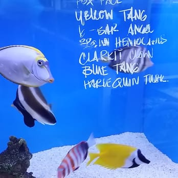 Jan S Tropical Fish Of Jan S Tropical Fish 19 Photos Local Fish Stores 5427
