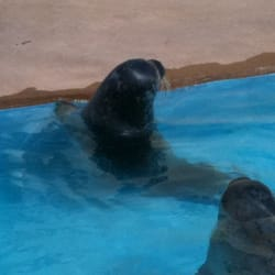 Natureland Seal Sanctuary, Skegness, Lincolnshire