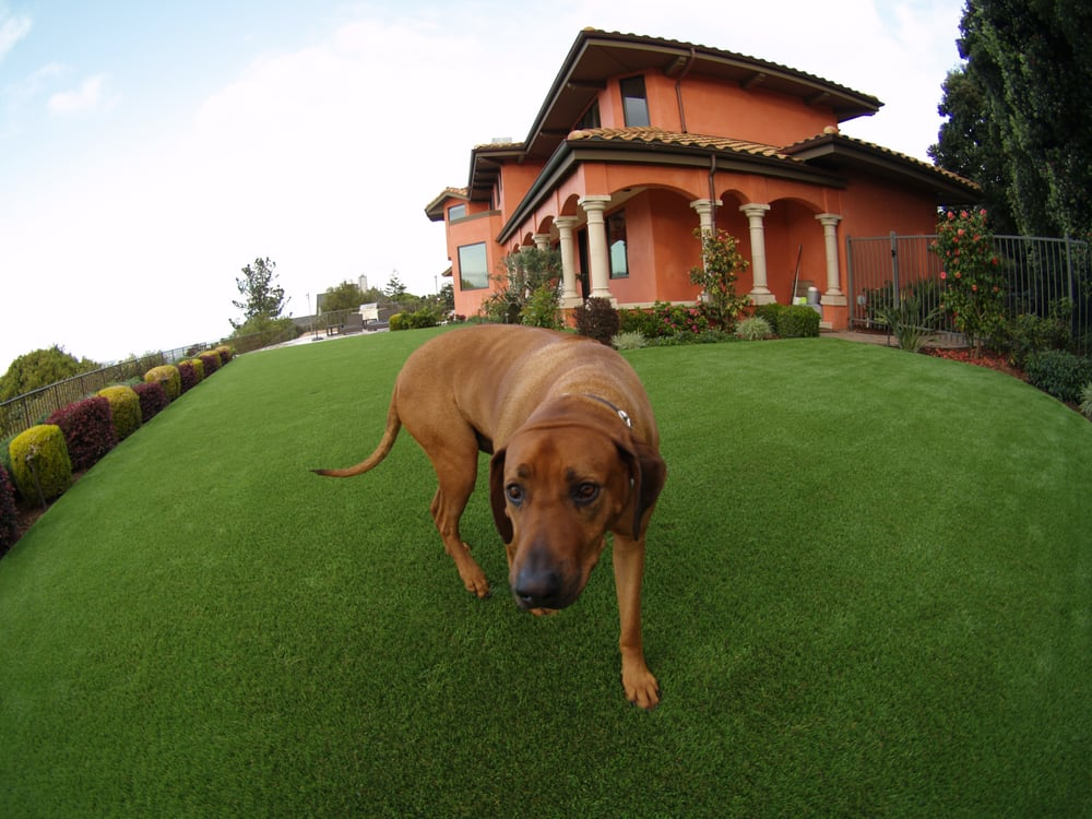 artificial grass for a dog running area installed in a