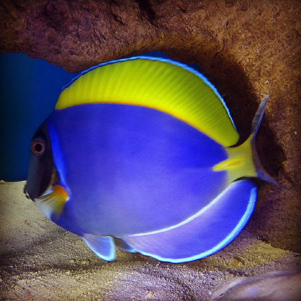 Ocean s tropical fish 103 photos aquariums 24001 via for Florida tropical fish