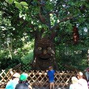 Der sprechende Baum
