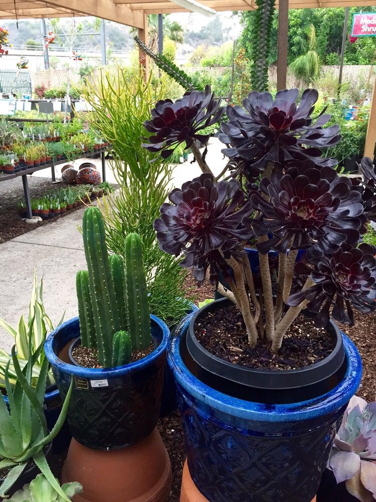 Armstrong Garden Centers 53 Photos Garden Centres San Diego Ca United States Reviews
