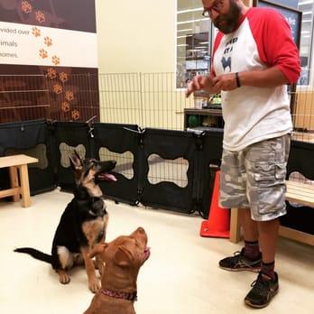 Dog Grooming Emeryville