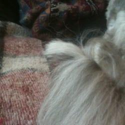 Dog Grooming Hudson Fl