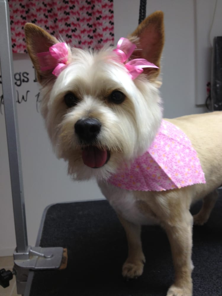 Shorewood (IL) United States  city pictures gallery : Pampered Puppy Dog Grooming Shorewood, IL, United States. Audrey ...