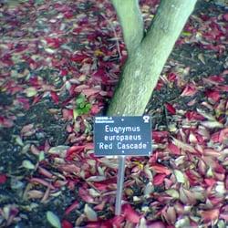 A glorious 'carpet' of red cascade…