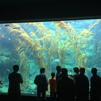 Birch Aquarium 932 Photos Aquariums La Jolla Shores