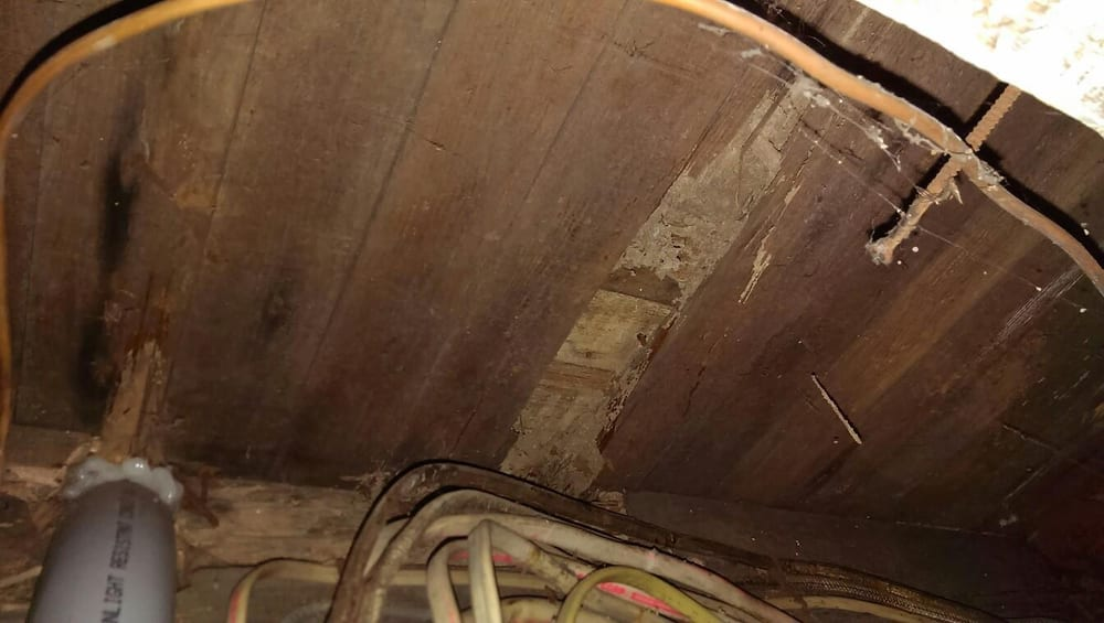 Eastern Subterranean Termite Damage In Sub-floor In Basement   Yelp