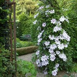 Eine von zig Blütenprachten im Garten
