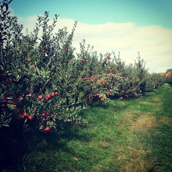 orchards united states connecticut