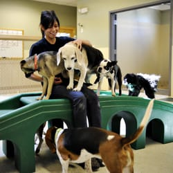 Camp Bow Wow® offers premier dog care services in San Antonio. Our doggy day care services are perfect for busy pet parents because your pup can get the exercise and socialization they need, and you can pick up a tired, and happy Camper.