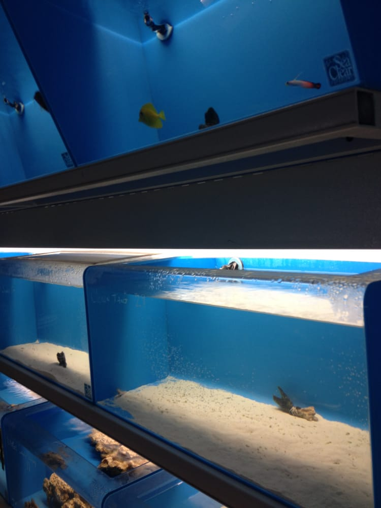 Salty Fish Aquariums - Aquarium Services - San Antonio, TX - Reviews ...