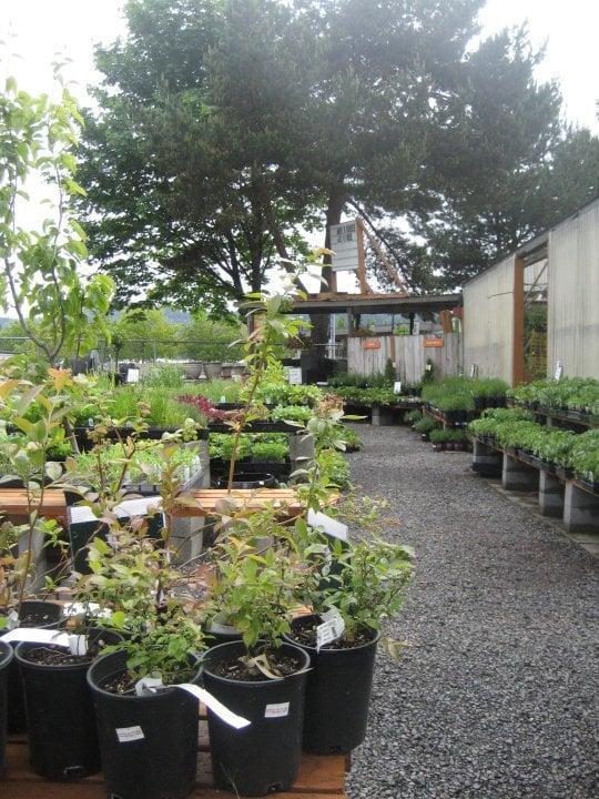 Creechs Garden Center And Landscaping : Dennis seven dees landscaping garden centers nurseries gardening southwest portland