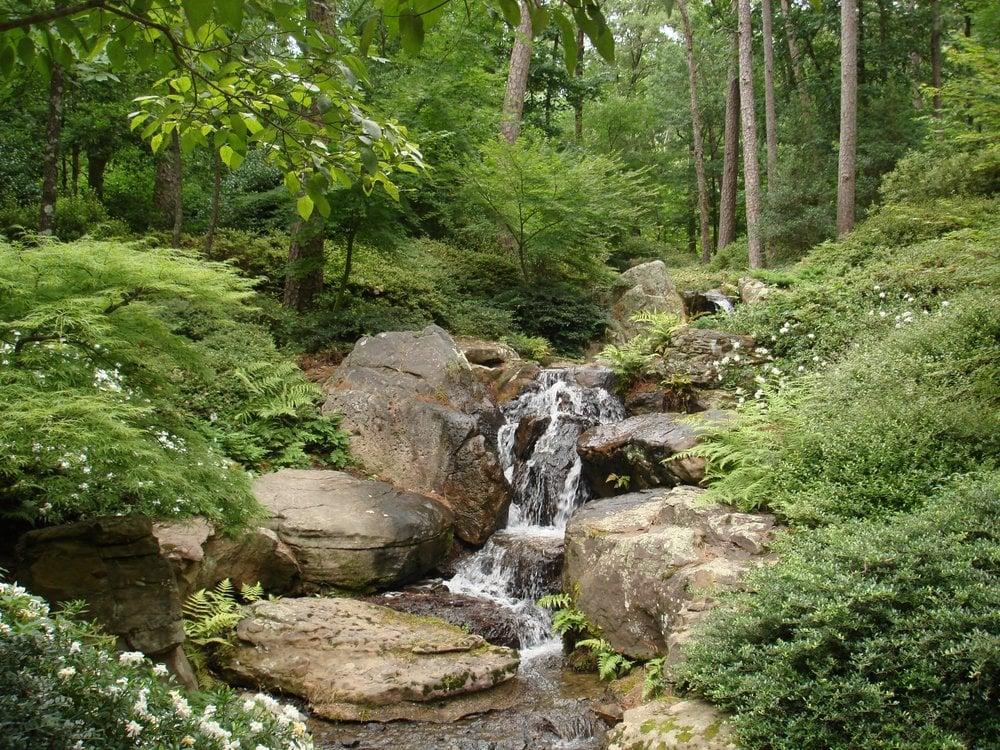 Photos For Garvan Woodland Gardens Yelp