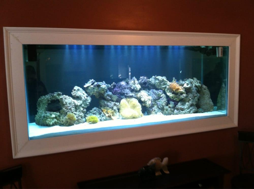 Custom built in wall fish tank yelp for Fish tank in wall
