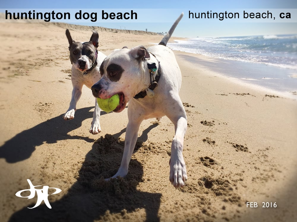 Puka dog huntington beach