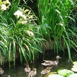 Biblical Garden At Rodef Shalom Botanical Gardens Shadyside Pittsburgh Pa Reviews