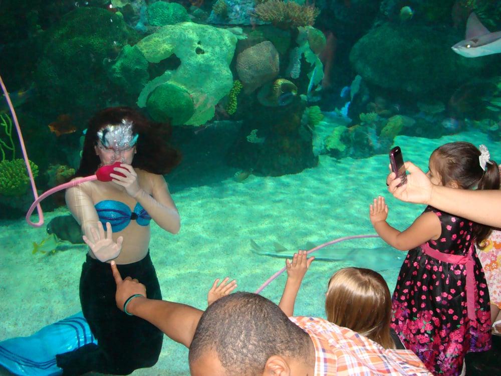 österreich online casino mermaid spiele