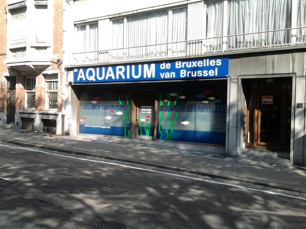 photos pour aquarium de bruxelles yelp