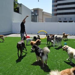 The wags club 35 photos pet boarding pet sitting for Dog boarding los angeles