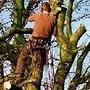Nunhead Tree Care