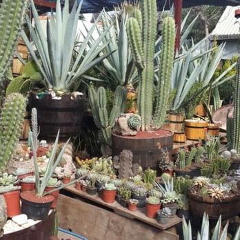 Mercado de plantas cuemanco viveros y jardiner a for Donde venden cactus