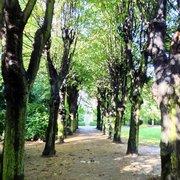 Die Allee im Park