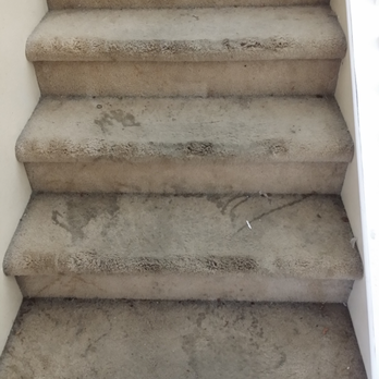 Keep it clean 84 photos 42 reviews carpet cleaning 8825 arabian filly ave centennial - Often clean carpets keep best state ...
