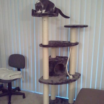 Kitty Mansions - 23 Photos & 26 Reviews - Pet Stores ...