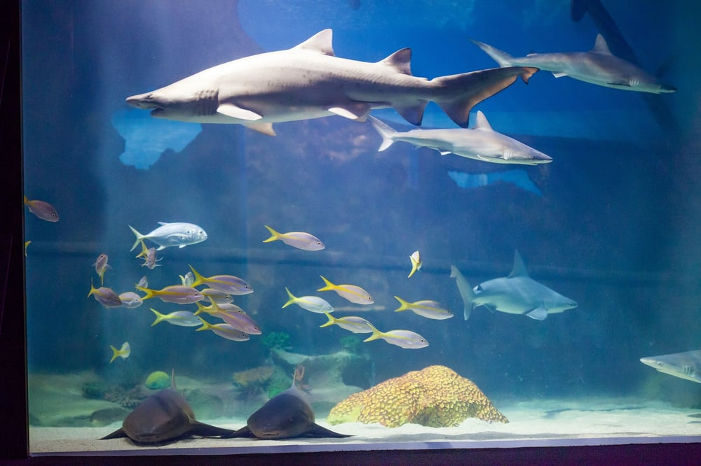 Greater Cleveland Aquarium Aquariums Reviews Yelp