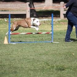 Dog Agility Training Santa Clarita