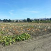 Martial Cottle Park - San Jose, CA, États-Unis. This years' first batch of regular and giant pumpkins for the Harvest festival and pumpkin patch!