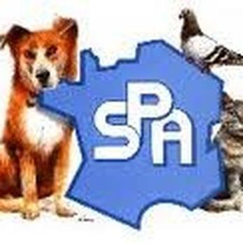 Soci t protectrice des animaux s p a refuge spa for Porte de champerret salon animaux